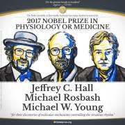 ההכרזה על זוכי פרס נובל לרפואה לשנת 2017, מגלי המנגנון המולקולארי שמאחורי השעון הביולוגי. איור: ועדת פרס נובל