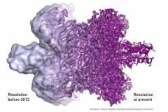 דוגמה לשיפור הרזולוציה של ביו-מולקולה: מצד שמאל, לפני שנת 2013; מצד ימין, כיום.
