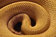 חברת פארקר האנפין תכננה צינור עמיד לשחיקה בהשראת עור הנחש. אילוסטרציה: pixabay.