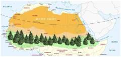 חבל סאהל, הגובל בסהרה. היער גדול מסכום עציו. מקור: מגזין מכון ויצמן.