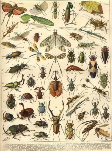 למדע מוכרים כמיליון מינים של פרוקי רגליים, שמהווים כ-80 אחוז מכלל בעלי החיים על פני כדור הארץ. מקור:  larousse encyclopedias / Flickr.