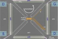 המערך הניסויי לבחינת המוליכות התרמית של אלקטרונים המשתתפים באפקט הול הקוונטי