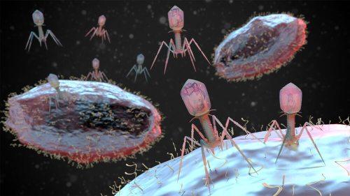 בקטריופאג'ים תוקפים חיידקים. איור: shutterstock