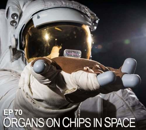 איבר על שבב בתחנת החלל. איור: ספייס פארמה