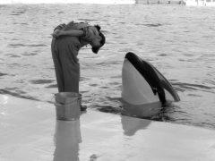עובדת במרכז ימי קדה קידה בפני לווייתן. מקור: gwaar.