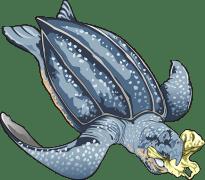 צב ים בולע שקית פלסטיק. איור: מתוך PIXABAY.COM
