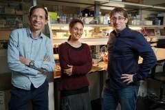 """(מימין לשמאל) : ד""""ר ישי פיקמן, הדוקטורנטית איילת אלפרט ופרופ""""ח שי שן-אור. צילום: ניצן זוהר, דוברות הטכניון"""