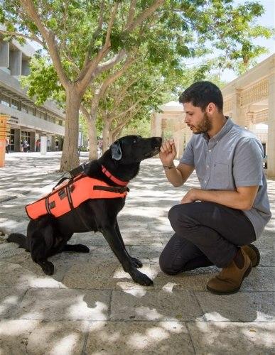 כלב לבוש האפוד המשופר, באמצעותו ניתן לאמן את הכלב לשבת, לשכב, לשוב למאלף או להביא אובייקט בהתאם לרטט   צילום: יונתן עטרי