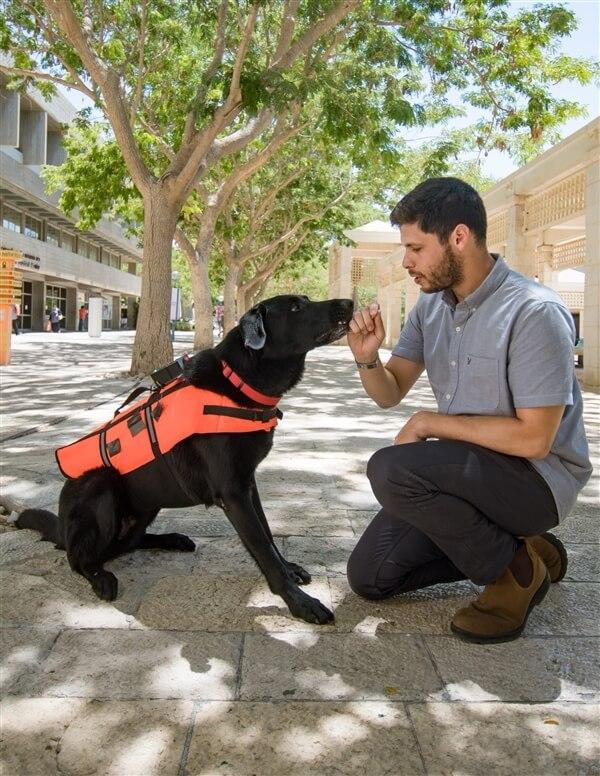 כלב לבוש האפוד המשופר, באמצעותו ניתן לאמן את הכלב לשבת, לשכב, לשוב למאלף או להביא אובייקט בהתאם לרטט | צילום: יונתן עטרי