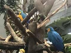 תוכים בהדמיית היער הטרופי בגן החיות של סן פרנסיסקו. צילום: אבי בליזובסקי