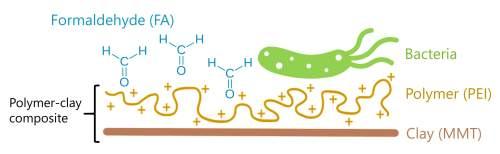 איור: מולקולת הפורמלדהיד (תכלת) נקשרת לקומפלקס העשוי מחרסית (פס חום) ומפולימר (קו חום מפותל). תהליך זה מוריד את ריכוז הפורמלדהיד בתמיסה ואת רעילותו וכך מאפשר לחיידק (ירוק) להתקיים ולפרק את החומר