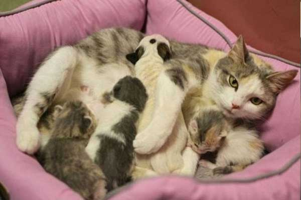 Yavru Pitbull'a Annelik Eden Kedi