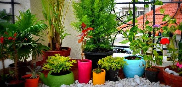 Balkonunuzda Yetiştirebileceğiniz 10 Mükemmel Bitki