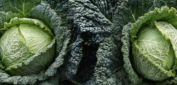 Kale Bitkisini Biliyor Musunuz?