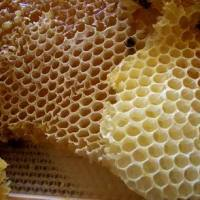 """صمغ النحل له فعالية في محاربة آثار """"الكورتيزون"""""""