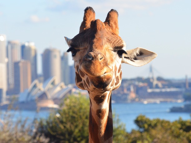 Things to do in Sydney: visit Taronga Zoo