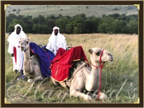 Luxury Tented Safaris