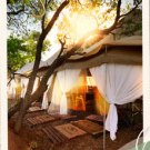 pamper safaris
