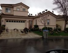 infested house by wild animals