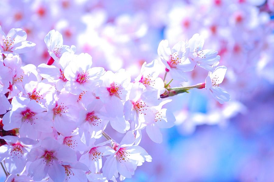 「春 フリー」の画像検索結果