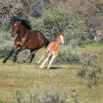 Arizona S Wild Horse Paradox High Country News Know The West