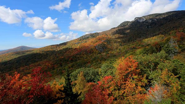 Autumn colors have been a bit late arriving in the North Carolina High Country this year, but the foliage show is beginning to get dramatic. This photograph taken Monday from the Blue Ridge Parkway shows that peak color is probably just a few more days away on the southern slopes of Grandfather Mountain. To see more fall color photos, visit Grandfather Mountain's 2016 Fall Color Gallery at www.grandfather.com. Photo by Jim Morton | Grandfather Mountain Stewardship Foundation