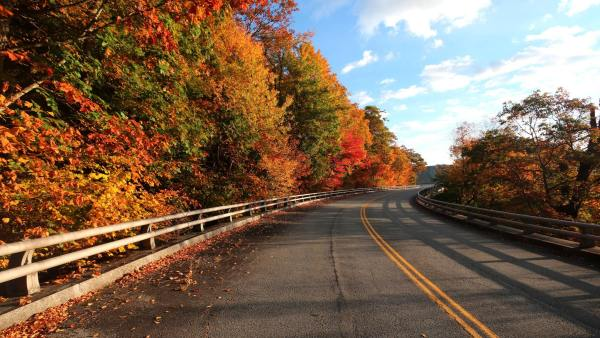 Early morning light on Thursday brightened the roadside foliage along the Blue Ridge Parkway's Linn Cove Viaduct on Grandfather Mountain. Autumn color is now at peak in many parts of the North Carolina High Country and is expected to be dynamic for at least another week. Photo by Jim Morton | Grandfather Mountain Stewardship Foundation