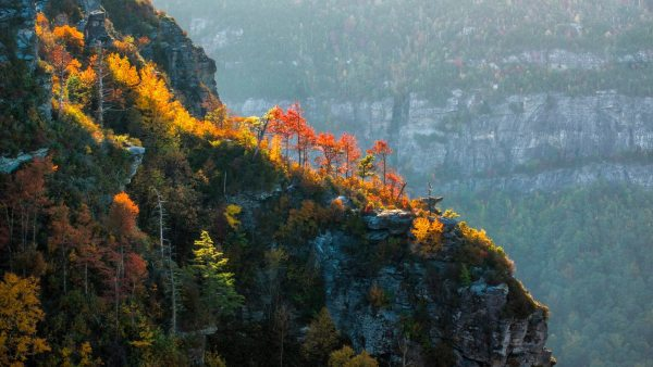 Autumn foliage climbs its way up the Linville Gorge. Experts believe fall color is currently peaking at higher elevations and will continue to do so throughout the weekend. Photo by Skip Sickler | Grandfather Mountain Stewardship Foundation