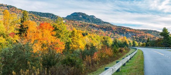 Vibrant oranges, yellows and golds lead the way to Grandfather Mountain along the Blue Ridge Parkway. According to experts, warm temperatures this week could slow down leaf color development, potentially prolonging peak color through the weekend. Photo by Skip Sickler | Grandfather Mountain Stewardship Foundation