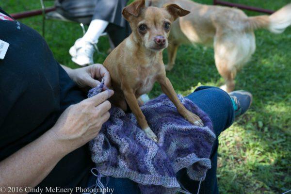 2016 August Apple Hill Farm Knitting-0333