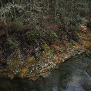 Damage from fires can be seen Dec. 12, 2016, along Buck Creek near Marion came from the Clear Creek fire that struck McDowell County in November. Colby Rabon / Carolina Public Press