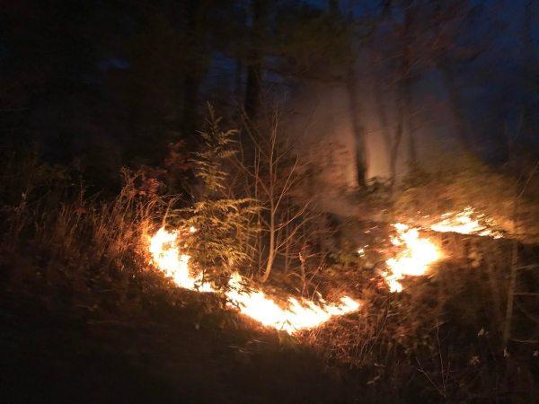 Back burn operations along Sampson Road. 11/22/16