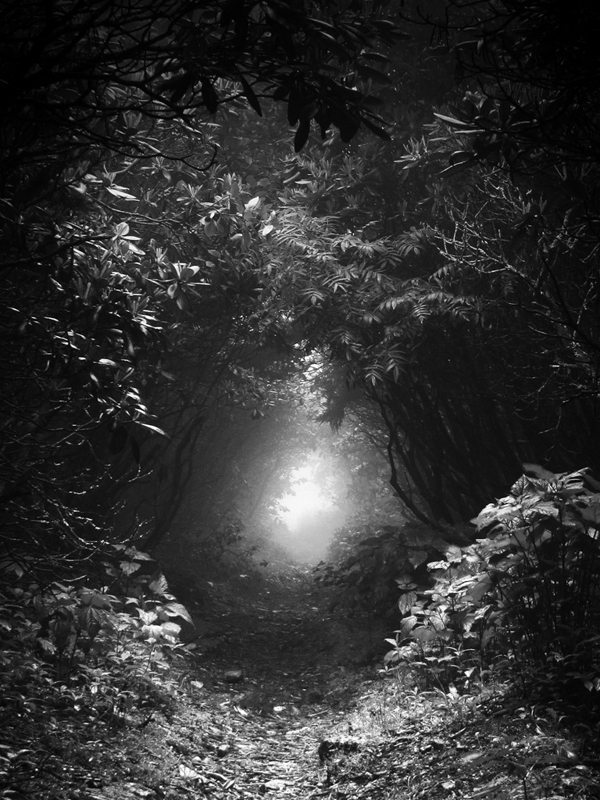 """Forest Tunnel"" by Annkatrin Rose"