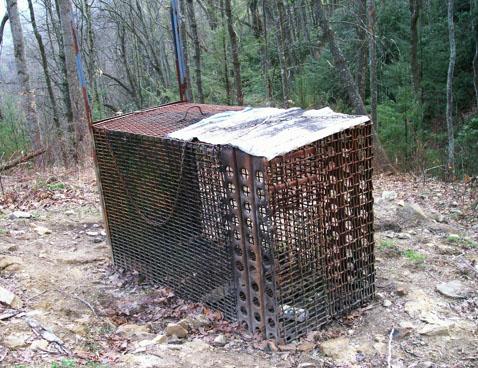 bear bait trap