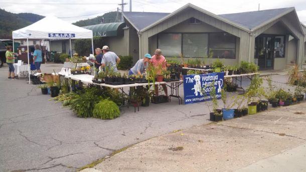 SNIPS Plant Sale