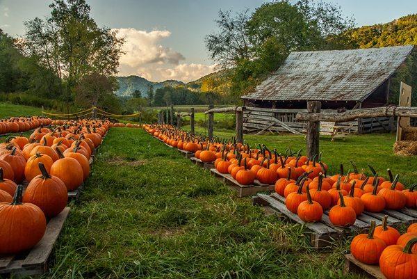"""Valle Crucis Pumpkins"" by Matthew Irvin"