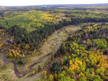 This aerial photo shows how the Ness Creek Site, home of the Northern Lights Bluegrass and Old Tyme Festival, is nestled in the forest of Northern Saskatchewan, Canada. Photo credit: Jon Pepper.