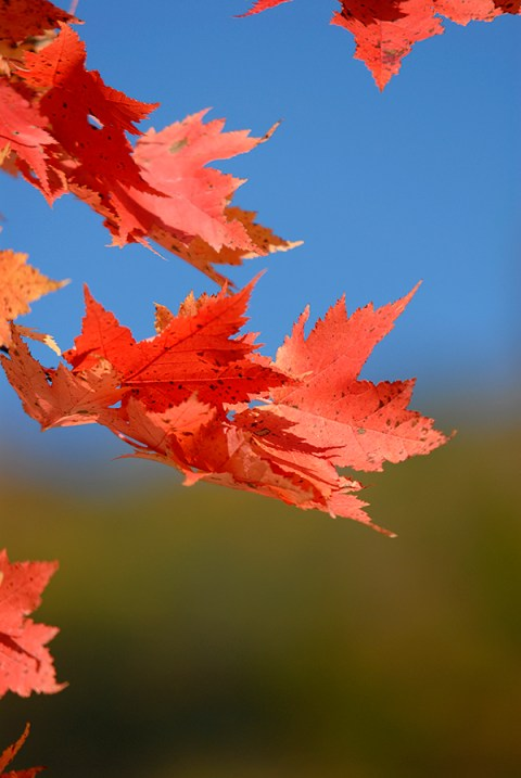 willis_fall_colors_valle_crucis_237
