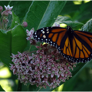 Native Plant Society Announces Final Native Plant Sale of the Season in Boone This Saturday