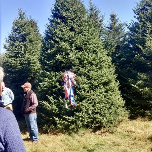 This Year's White House Christmas Tree is Coming from Peak Farms in Ashe County