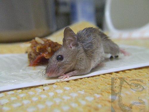raton2.jpg