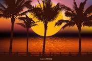 HD palm tree Wallpapers   palm wallpapers for background   iphone background