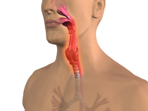 Throat Inflammation2 আপনার প্রয়োজনীয় পোস্ট লিংক। আপনার প্রয়োজনীয় পোস্ট লিংক। Throat Inflammation2 300x225