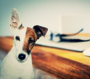 DC Source - Pet Owners