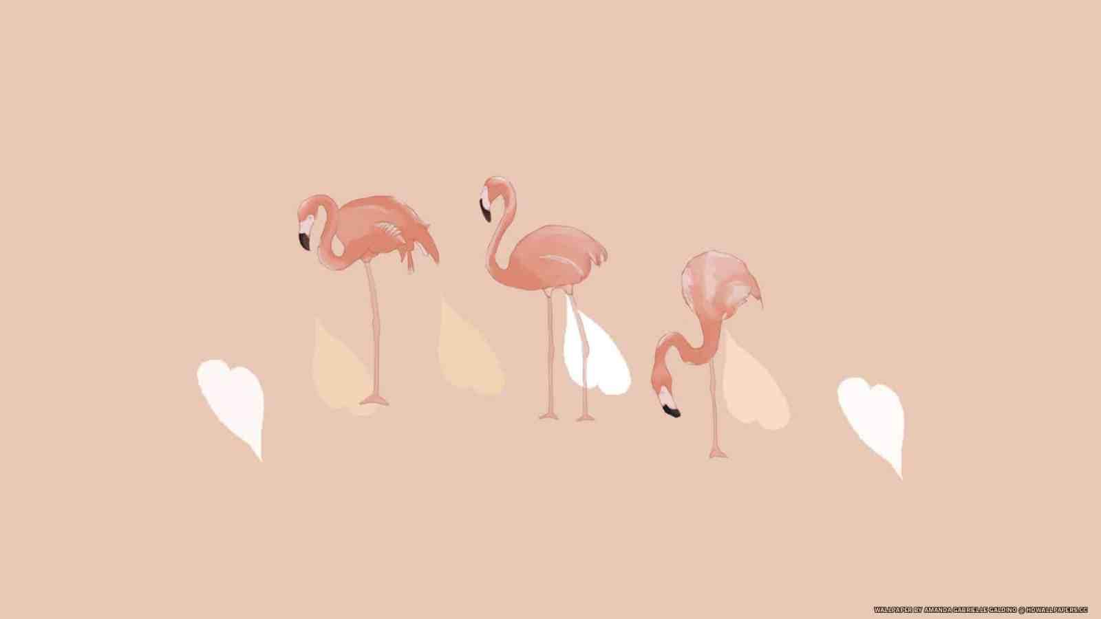 Flamingos Hd Wallpapers