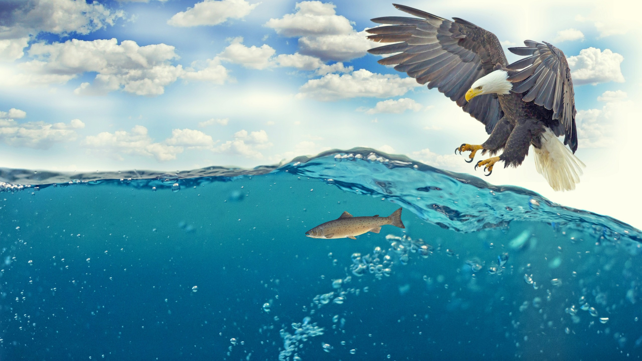 Eagle Fish Underwater 4K Wallpapers HD Wallpapers ID