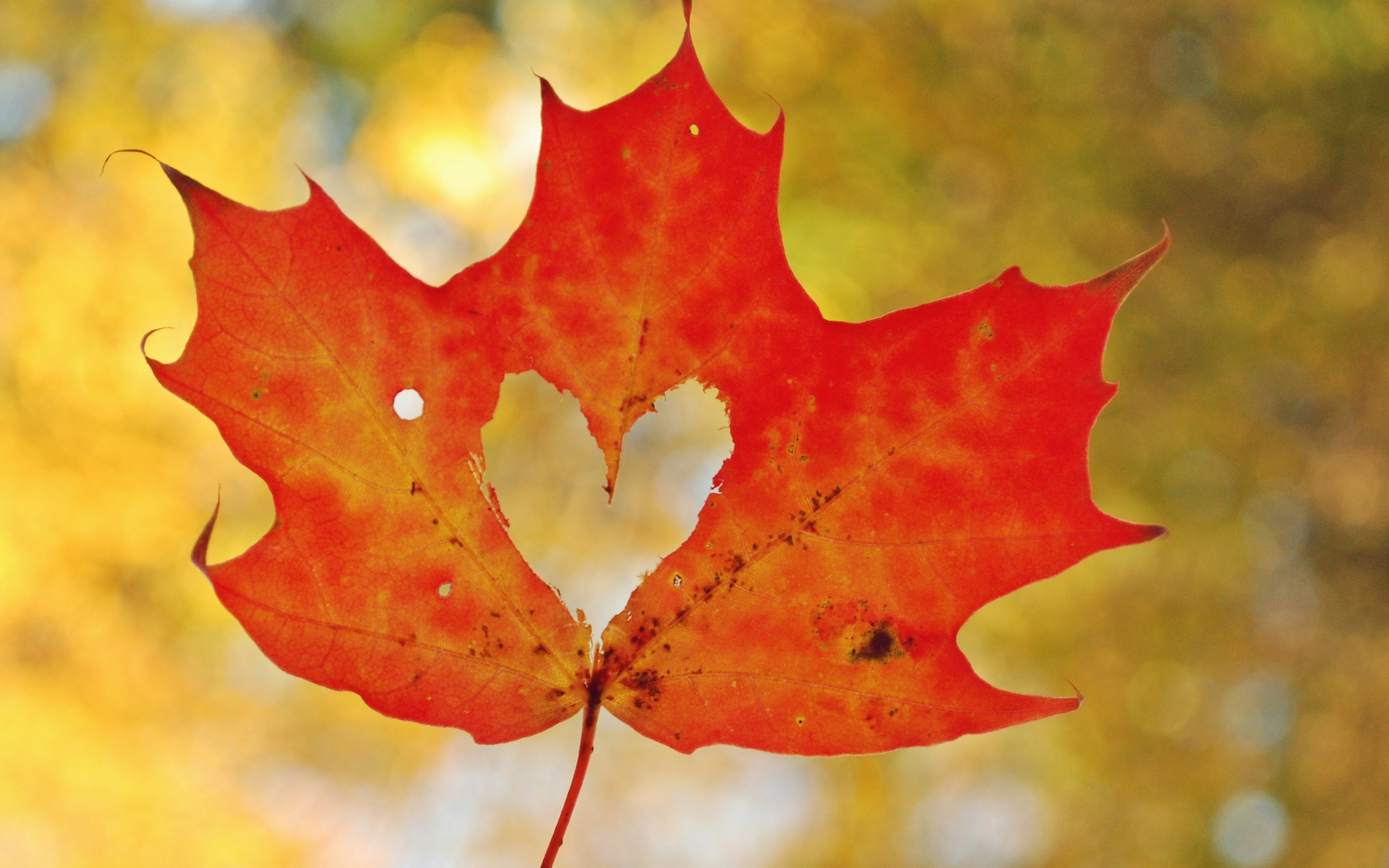 Love Heart Maple Leaf Wallpapers HD Wallpapers ID 19483