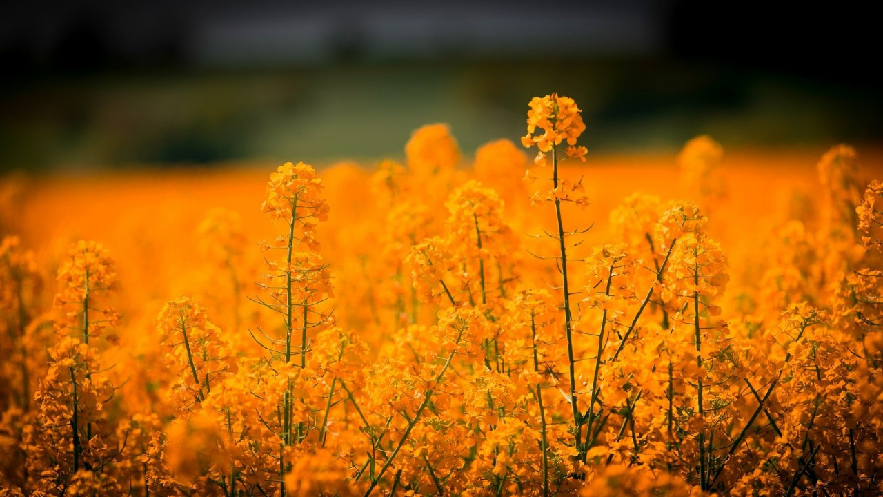 The view from your computer may not be ideal, but even if you can't see the world in reality you can easily shift your desktop to another part of the world with a great image. Orange Flowers In Blur Background HD Orange Aesthetic