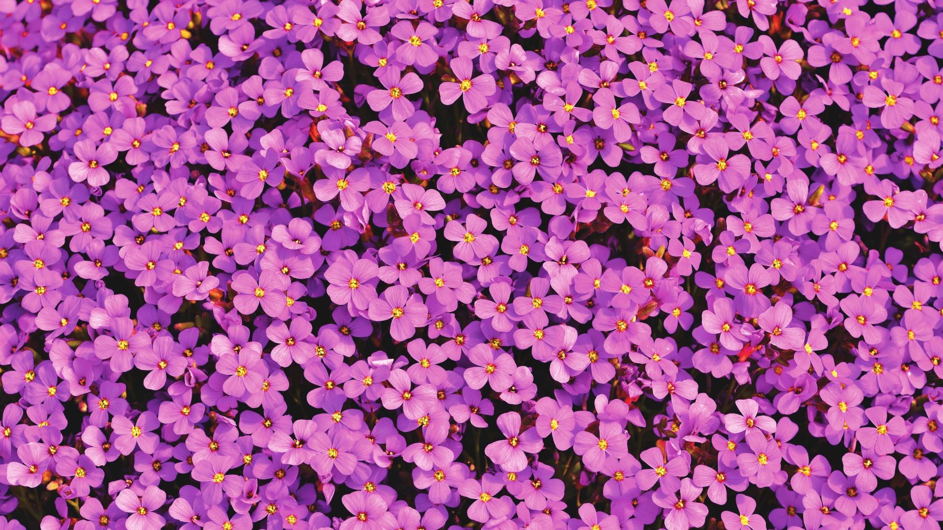 Cute Wallpapers Laptops Purple