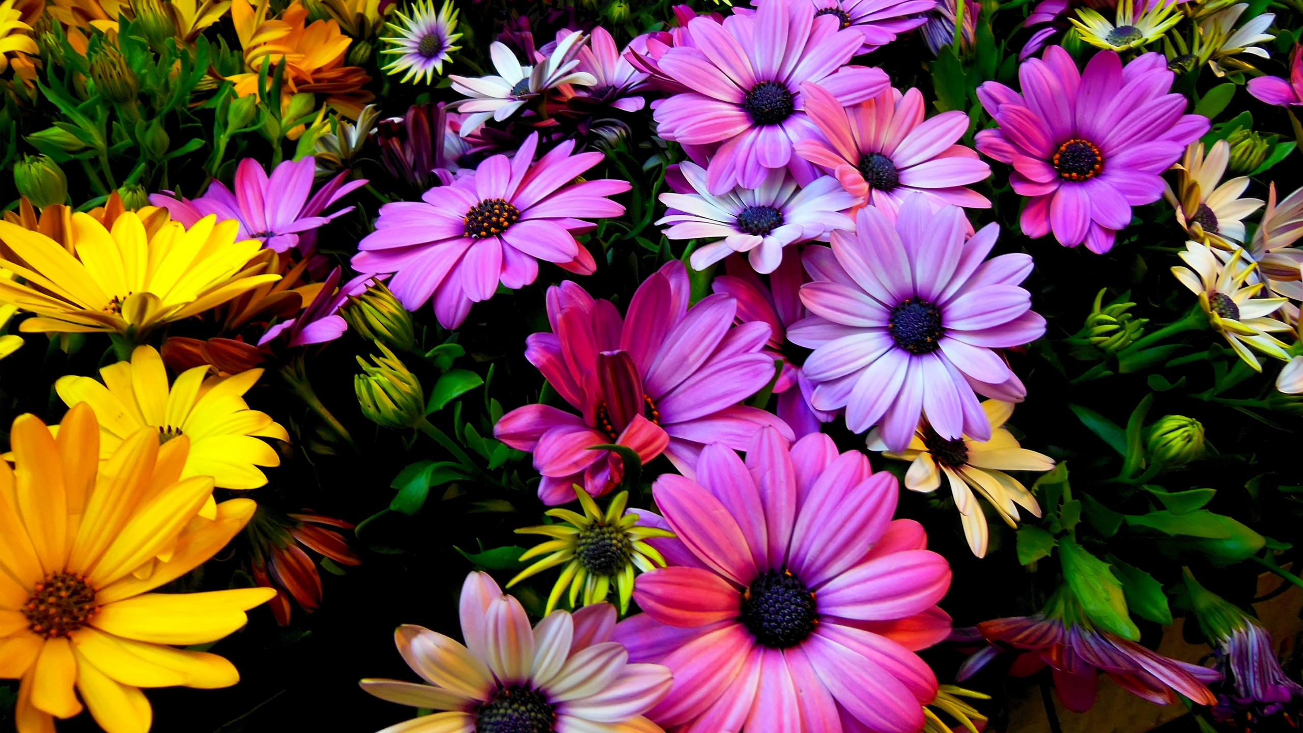 Images have the power to move your emotions like few things in life. Purple Yellow Daisy Flowers Wallpapers   HD Wallpapers